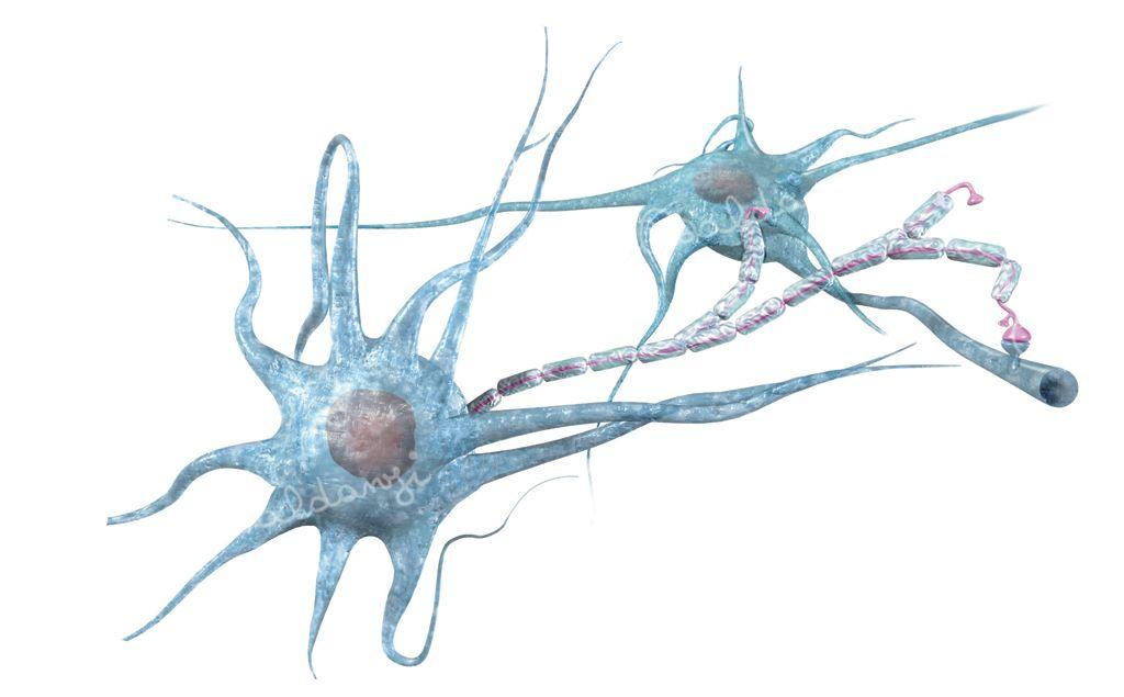 Anatomia-neuroni